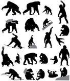Σκιαγραφίες των χιμπατζών και cubs Ελεύθερη απεικόνιση δικαιώματος