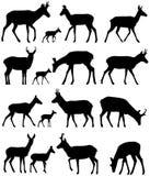 Σκιαγραφίες Pronghorn Απεικόνιση αποθεμάτων