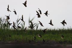 Σκιαγραφεί τα πετώντας ψαρόνια που κάθονται στο έδαφος Στοκ φωτογραφία με δικαίωμα ελεύθερης χρήσης