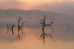 Σκιαγραφημένα δέντρα στο νερό στην αυγή Στοκ Εικόνες