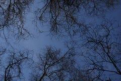 Σκιαγραφημένα δέντρα στο λυκόφως Στοκ Εικόνα