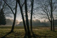 Σκιαγραφημένα δέντρα στο ομιχλώδες πάρκο Στοκ φωτογραφίες με δικαίωμα ελεύθερης χρήσης