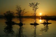 σκιαγραφημένα δέντρα Στοκ φωτογραφίες με δικαίωμα ελεύθερης χρήσης
