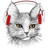 Σκιαγραφημένη γάτα με τα κόκκινα ακουστικά Στοκ Εικόνα