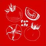 Σκιαγραφημένη ντομάτα στο κόκκινο υπόβαθρο Ελεύθερη απεικόνιση δικαιώματος