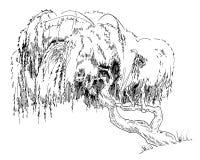 Δέντρο ιτιών Στοκ φωτογραφίες με δικαίωμα ελεύθερης χρήσης