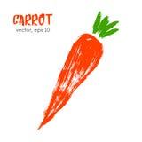 Σκιαγραφημένη φυτική απεικόνιση του καρότου Στοκ Εικόνα