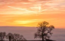 Σκιαγραφημένο δέντρο Γ ενάντια στον ουρανό ανατολής στη χρυσή ώρα Στοκ φωτογραφίες με δικαίωμα ελεύθερης χρήσης