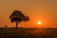 Σκιαγραφημένο δέντρο και αναδρομικά φωτισμένη χλόη στο ηλιοβασίλεμα Στοκ φωτογραφίες με δικαίωμα ελεύθερης χρήσης