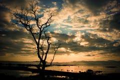 Σκιαγραφημένο δέντρο με το ζωηρόχρωμο ουρανό σύννεφων Στοκ Εικόνες