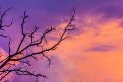 Σκιαγραφημένο δέντρο στον ουρανό λυκόφατος μετά από το ηλιοβασίλεμα Στοκ Εικόνες