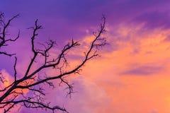 Σκιαγραφημένο δέντρο στον ουρανό λυκόφατος μετά από το ηλιοβασίλεμα Στοκ φωτογραφία με δικαίωμα ελεύθερης χρήσης