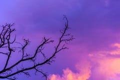 Σκιαγραφημένο δέντρο στον ουρανό λυκόφατος μετά από το ηλιοβασίλεμα Στοκ Εικόνα