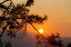 Σκιαγραφημένο δέντρο στον ουρανό λυκόφατος μετά από το ηλιοβασίλεμα Στοκ φωτογραφίες με δικαίωμα ελεύθερης χρήσης