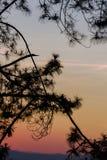 Σκιαγραφημένο δέντρο στον ουρανό λυκόφατος μετά από το ηλιοβασίλεμα Στοκ Φωτογραφία