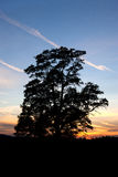 Σκιαγραφημένο δέντρο στο ηλιοβασίλεμα. Στοκ Εικόνες