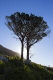 Σκιαγραφημένο δέντρο στο πόδι του επιτραπέζιου βουνού Στοκ εικόνα με δικαίωμα ελεύθερης χρήσης