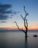 σκιαγραφημένο δέντρο Στοκ εικόνες με δικαίωμα ελεύθερης χρήσης