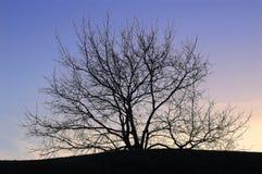 σκιαγραφημένο δέντρο ηλιοβασιλέματος Στοκ Εικόνες