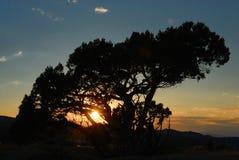 σκιαγραφημένο δέντρο ηλι&omi Στοκ φωτογραφία με δικαίωμα ελεύθερης χρήσης