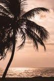 Σκιαγραφημένο δέντρο καρύδων με τη θάλασσα ηλιοβασιλέματος Στοκ φωτογραφία με δικαίωμα ελεύθερης χρήσης