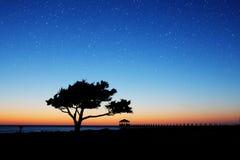Σκιαγραφημένο δέντρο με τα αστέρια νύχτας Στοκ φωτογραφία με δικαίωμα ελεύθερης χρήσης