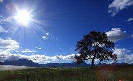 σκιαγραφημένο δέντρο Στοκ Εικόνες