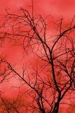 σκιαγραφημένο δέντρο Στοκ Εικόνα