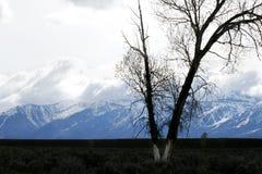 σκιαγραφημένο δέντρο Στοκ εικόνα με δικαίωμα ελεύθερης χρήσης