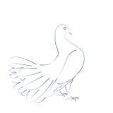 Σκιαγραφημένο περιστέρι Στοκ φωτογραφία με δικαίωμα ελεύθερης χρήσης