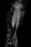 Σκιασμένη παράδοση Στοκ Εικόνες