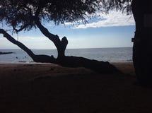 Σκιερή παραλία Στοκ εικόνα με δικαίωμα ελεύθερης χρήσης