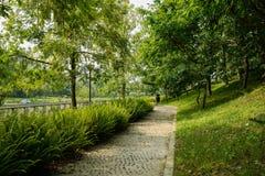 Σκιερή στρωμένη κυβόλινθος πορεία το ηλιόλουστο θερινό πρωί στοκ φωτογραφία με δικαίωμα ελεύθερης χρήσης