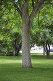 σκιόφυτο πάρκων πόλεων cottonwood μ&e στοκ φωτογραφίες με δικαίωμα ελεύθερης χρήσης