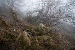 Σκληρή πάχνη, παγωμένο τοπίο χωρών των θαυμάτων εγκαταστάσεων Υπόβαθρο ομίχλης και υδρονέφωσης, παγωμένα φύλλα και λουλούδια στοκ εικόνες