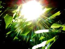 Σκοτάδι στο φως Στοκ Εικόνα