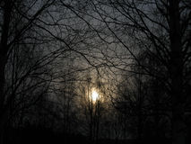Σκοτεινά δάση Στοκ Φωτογραφία