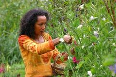 σκοτεινά λουλούδια που επιλέγουν την όμορφη γυναίκα στοκ εικόνες