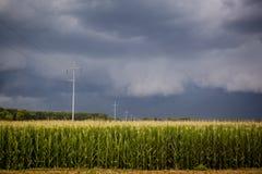 σκοτεινά πεδία καλαμποκιού σύννεφων πέρα από τη θύελλα Στοκ Φωτογραφίες