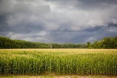 σκοτεινά πεδία καλαμποκιού σύννεφων πέρα από τη θύελλα Στοκ Φωτογραφία