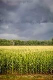 σκοτεινά πεδία καλαμποκιού σύννεφων πέρα από τη θύελλα Στοκ φωτογραφίες με δικαίωμα ελεύθερης χρήσης