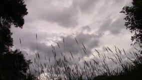 Σκοτεινά σύννεφα Timelapse απόθεμα βίντεο