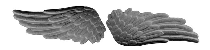 Σκοτεινά φτερά ασβεστοκονιάματος Στοκ φωτογραφίες με δικαίωμα ελεύθερης χρήσης