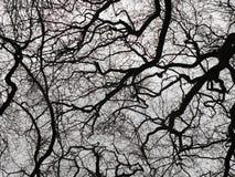 Σκοτεινά χειμερινά δέντρα και άκαμπτοι γυμνοί κλάδοι στη σκιαγραφία Στοκ Εικόνες