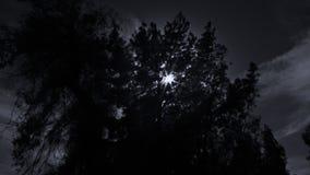 Σκοτεινές δέντρα και σκιαγραφίες φιλμ μικρού μήκους