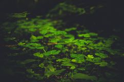 Σκοτεινή εικόνα του πράσινου χαμόκλαδου στοκ φωτογραφία με δικαίωμα ελεύθερης χρήσης