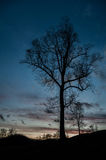 Σκοτεινή θλιβερή ψηλή σκιαγραφία δέντρων στο ηλιοβασίλεμα Στοκ Εικόνες