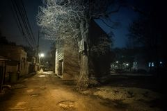 Σκοτεινή και μυστηριώδης αστική αλέα πόλεων με ένα δραματικό δέντρο τη νύχτα στοκ εικόνες με δικαίωμα ελεύθερης χρήσης