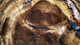 Σκοτεινή καφετιά και σύσταση κούτσουρων σφρίγους στοκ φωτογραφίες με δικαίωμα ελεύθερης χρήσης