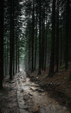 Σκοτεινή πορεία στο δάσος Στοκ εικόνα με δικαίωμα ελεύθερης χρήσης